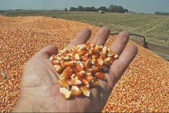 Maíz: levantan el cepo a las exportaciones y el campo termina el paro hoy
