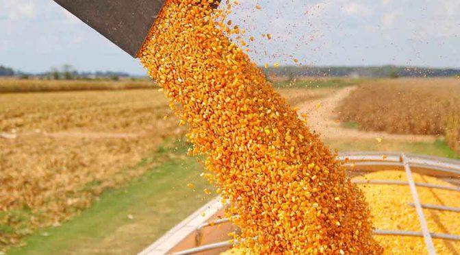 Chicago: la soja sumó 18 dólares y el maíz cotizó con el precio más alto desde 2013