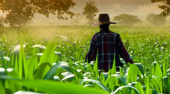 El maíz cerró con subas del 13% semanal en Chicago