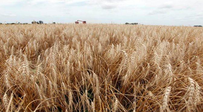 El trigo entrerriano 2021/22 no podrá rendir menos de 2.400 kg/ha si se quieren cubrir los costos
