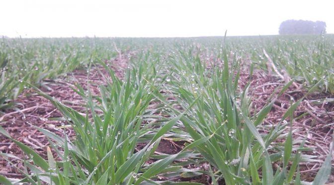 El Nación destinará $10.000 millones para financiar a pequeños y medianos productores de trigo, cebada y legumbres