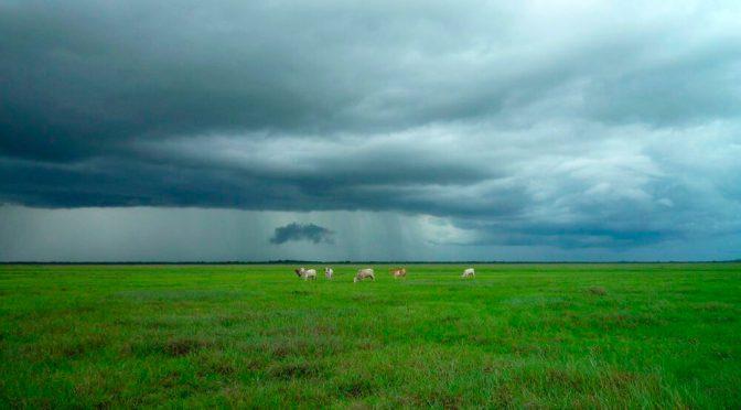 Agenda Aapresid de mayo: agregado de valor, arrendamientos, gestión agropecuaria, maíz tardío y ganadería