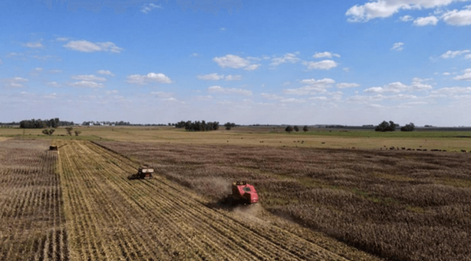 Se acelera la cosecha nacional de grano grueso sin modificar las proyecciones de producción