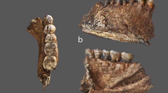 Menú prehistórico: revelan qué comían los neandertales hace 60.000 años